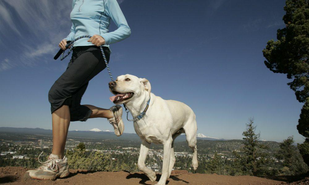 """""""L'esperto risponde"""": quante volte al giorno bisogna portare fuori il cane?"""