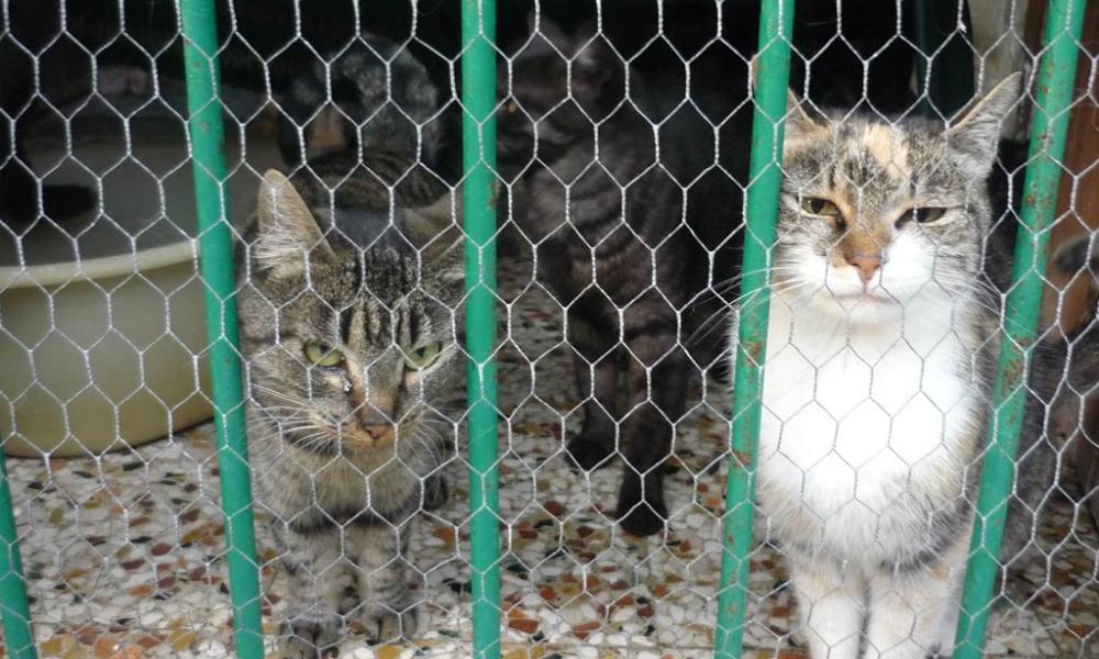 Mattanza all'oasi felina: gatti sbranati da cani feroci