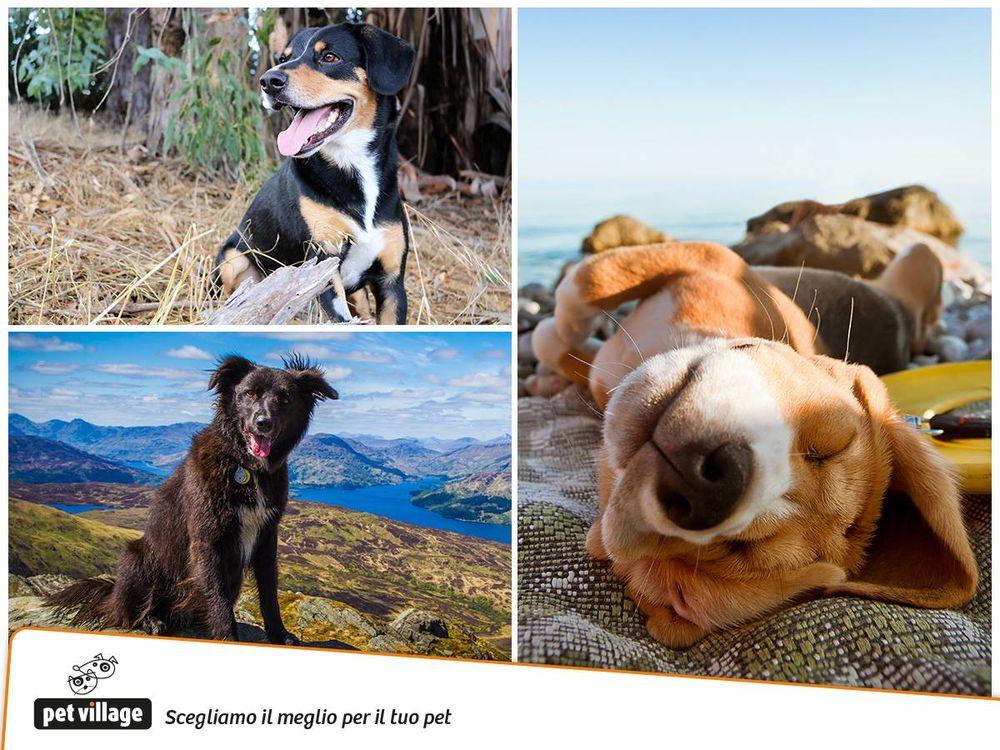 Pet Village a Zoomark 2017