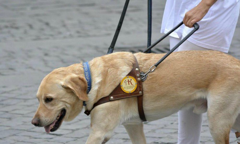Shock a Rimini: cane guida aggredito da un pitbull