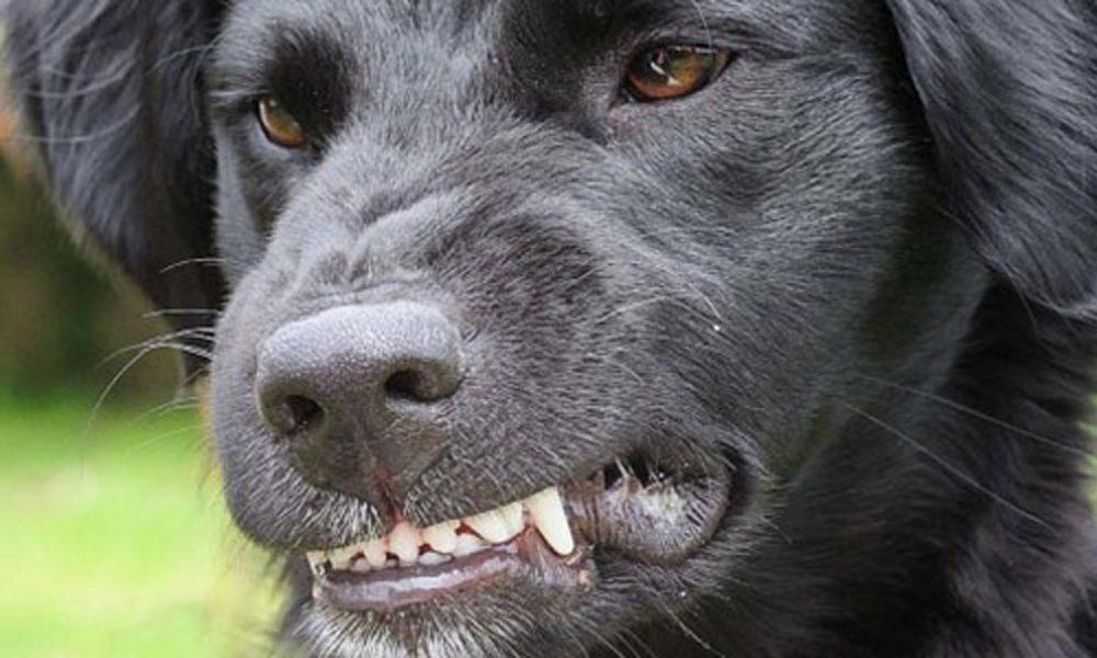 Il cane è aggressivo? Le 4 regole d'oro per correggere il comportamento
