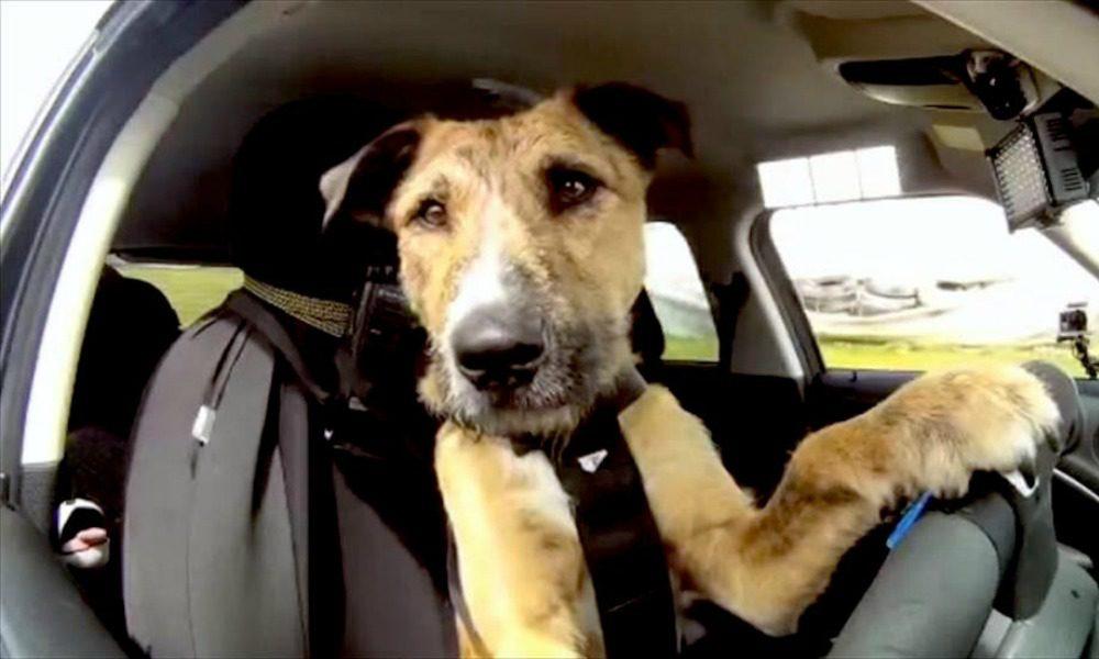 Cani in auto: le 3 regole del viaggio sicuro e a prova di legge