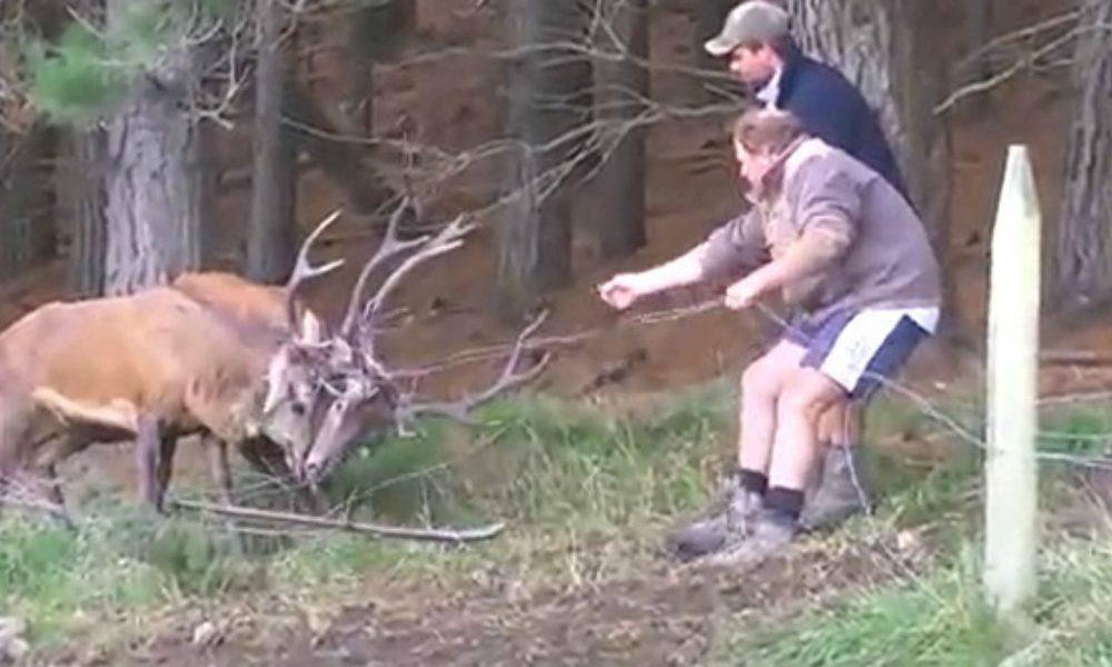 Due cervi incastrati rischiano di morire, poi… [VIDEO]