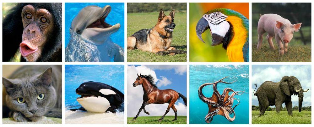 Gli animali più intelligenti secondo la scienza