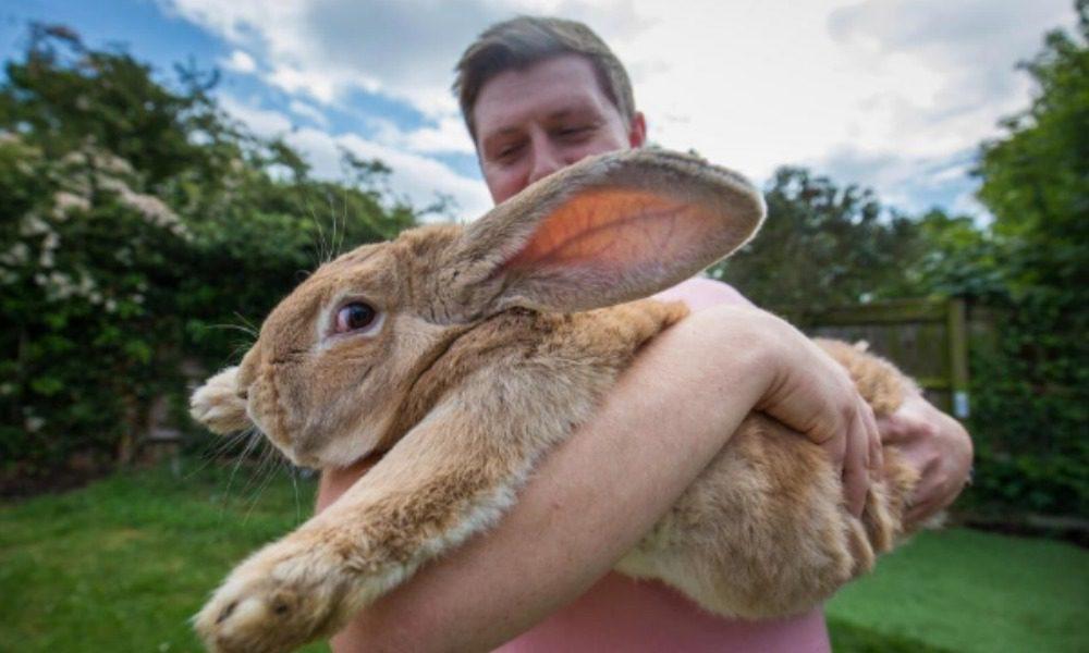 Dexter: il coniglio più grande del mondo (forse)
