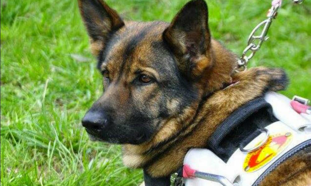 """Cane guida tolto al proprietario cieco: i vicini musulmani lo consideravano """"impuro"""""""