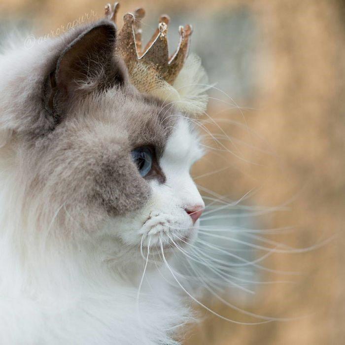 Aurora: la gatta principessa [FOTO]