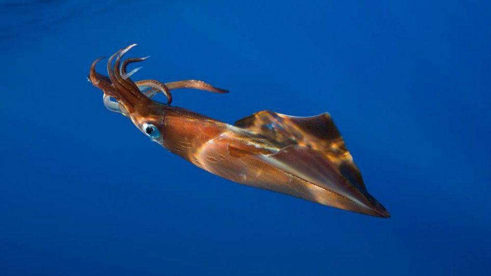Animali marini: le sette specie più grandi