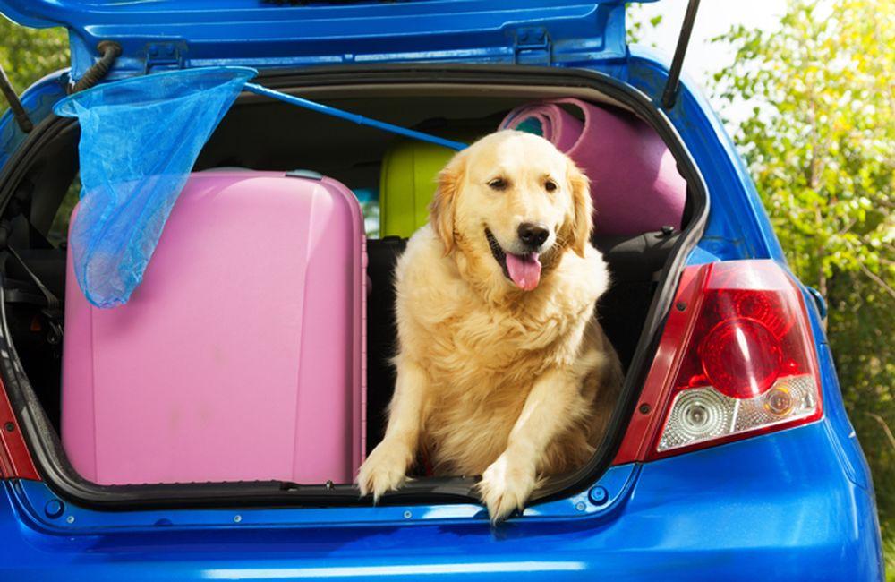 Caldo: come curare gli animali in viaggio
