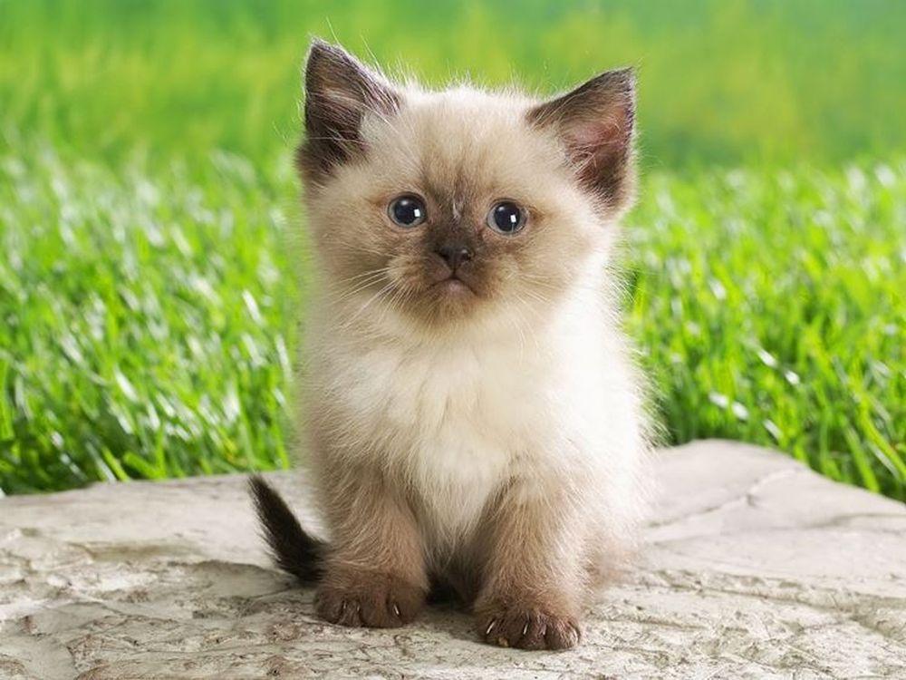 Nomi per gatti: idee originali
