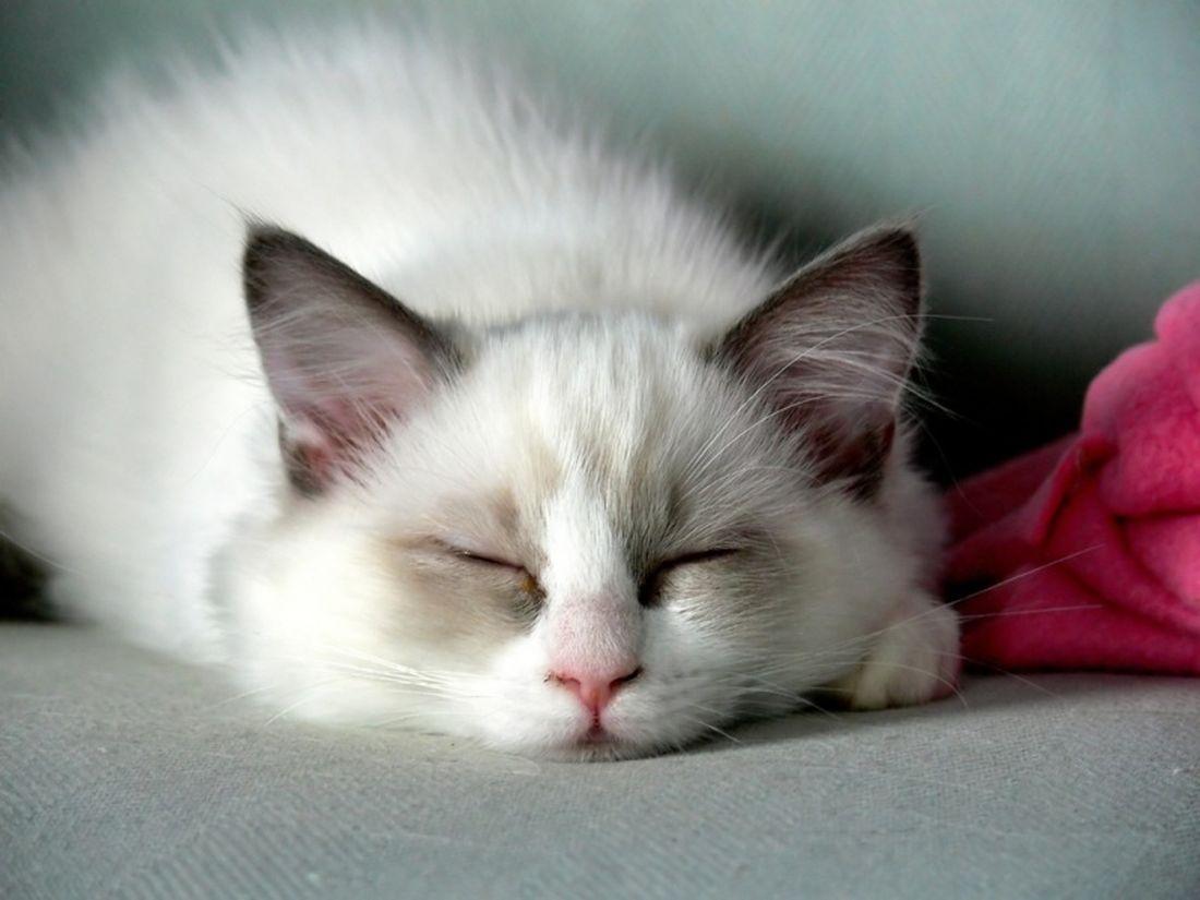 Nomi per gatti idee originali velvetpets - Cucina casalinga per gatti ...