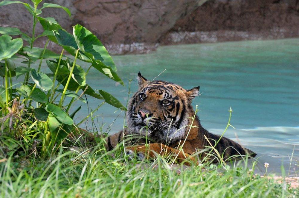 Caldo infernale: al Bioparco di Roma piscine e ghiaccioli per gli animali [FOTO]