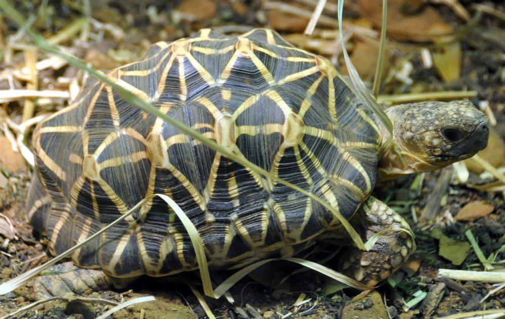 Tartarughe di terra: tutte le specie