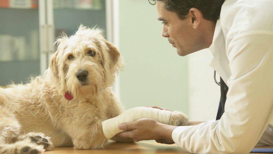 L'esperto risponde: l'artrosi nel cane