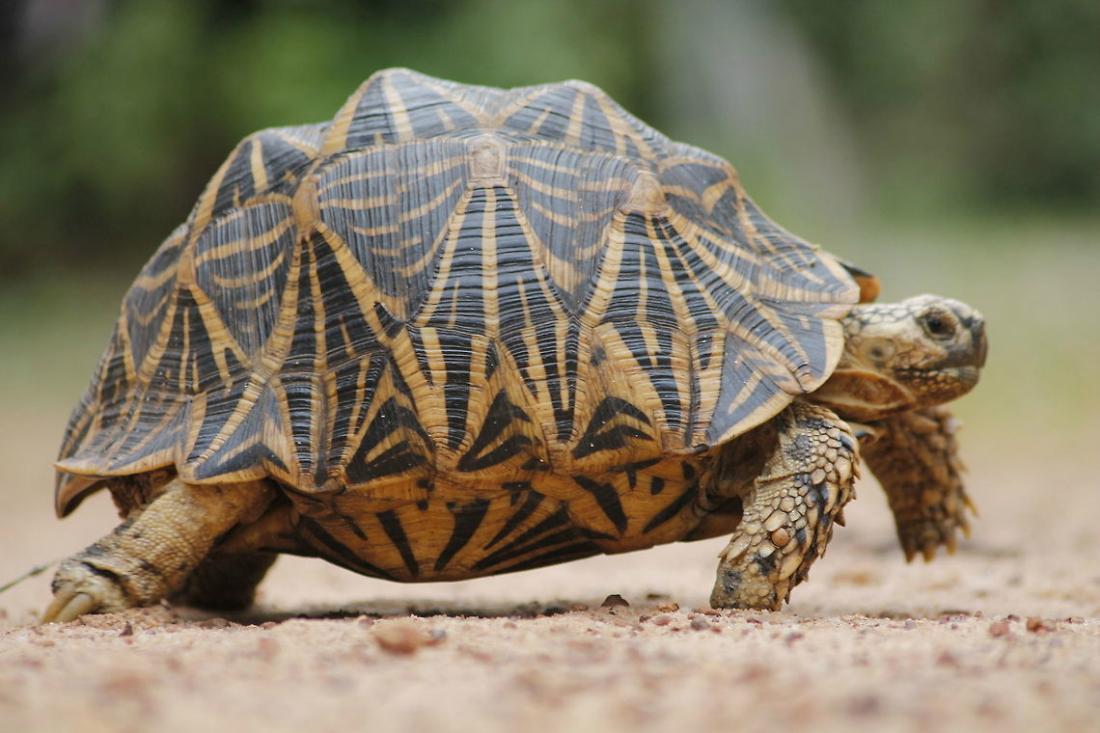 Tartarughe di terra tutte le specie velvetpets for Luce per tartarughe