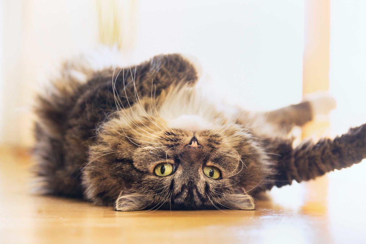 """Gatti e astrologia: il felino """"adatto"""" al vostro segno zodiacale"""