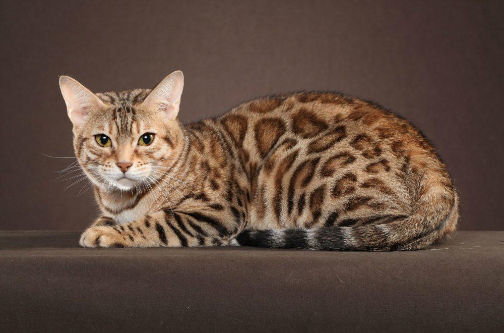 Foto di gatti: 7 felini bellissimi