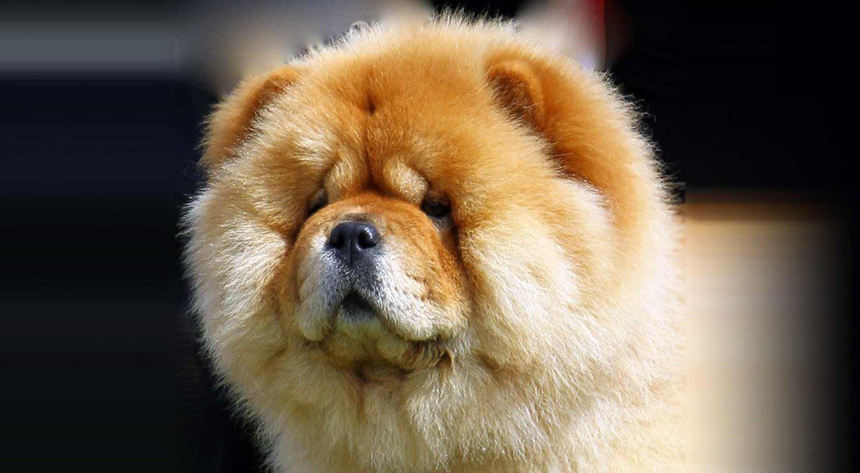 Chinese Dog Names For Pomerainian