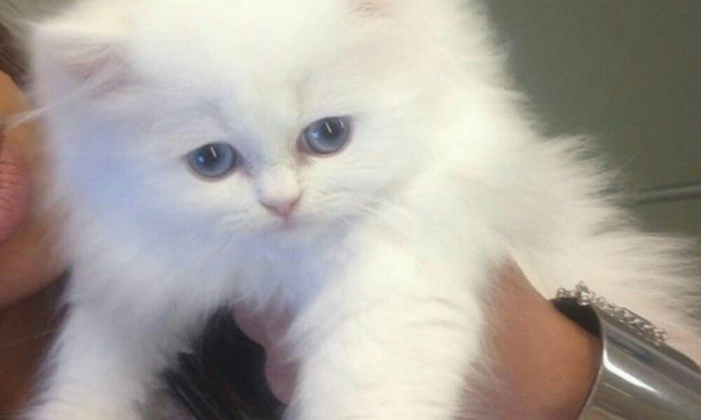 Kim Kardashian ricorda la triste storia del suo amato gattino