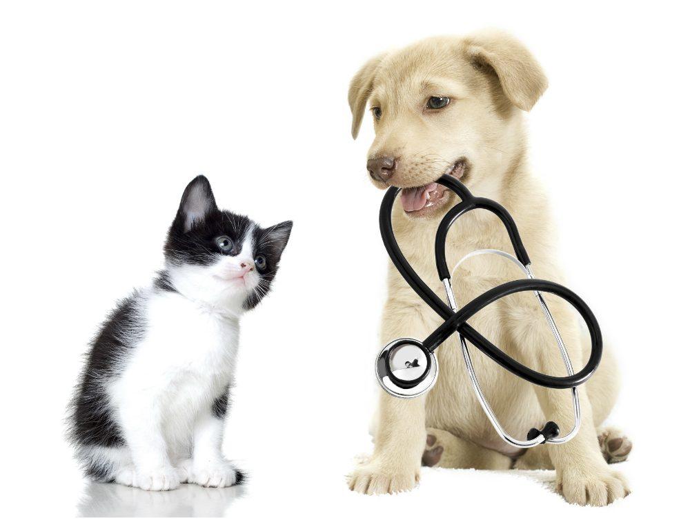 """""""L'esperto risponde"""" – Salmonellosi cane e gatto: sintomi e cura"""