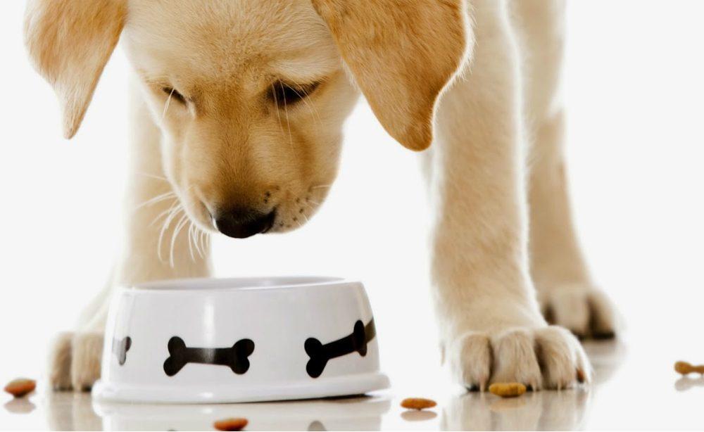 Diarrea cane: cosa dargli da mangiare