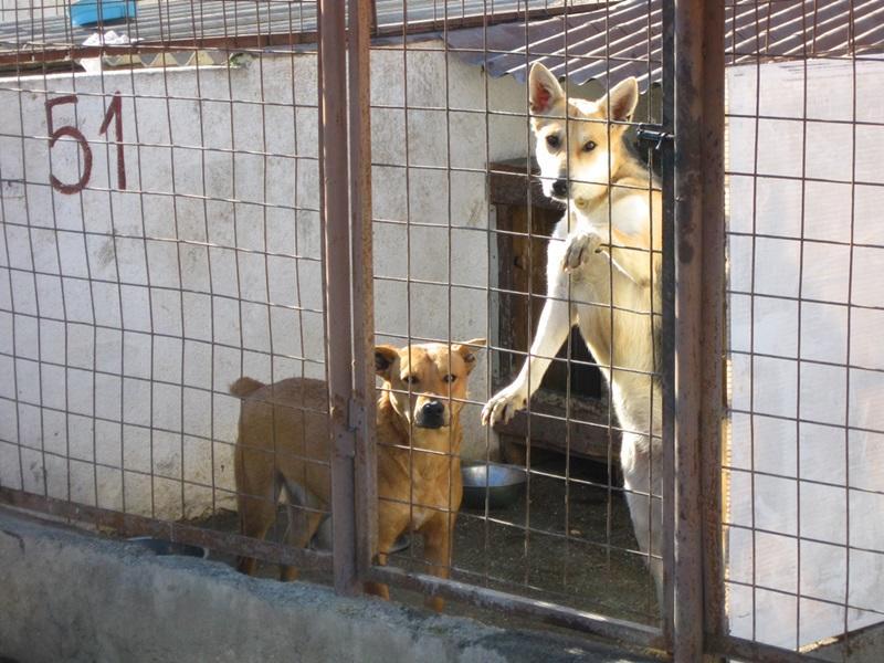 Lascia il cane in canile perch non pu mantenerlo poi ci - Portare il cane al canile ...