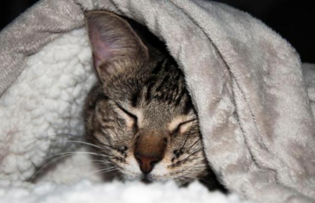 Diarrea gatto: l'alimentazione corretta, cosa deve mangiare
