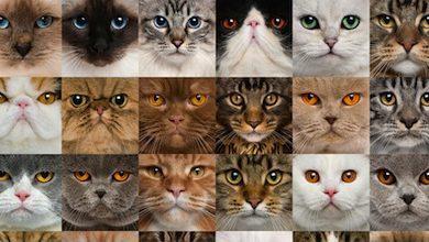 Gatti e astrologia: dimmi di che segno sei e ti dirò quale micio scegliere