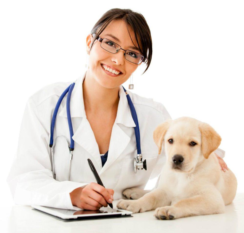 Muco nelle feci del cane: cause e cura
