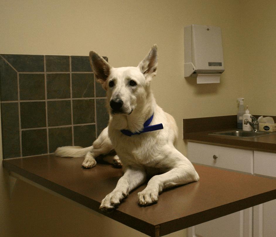Il vostro cane sta male? Avete diritto a un permesso retribuito