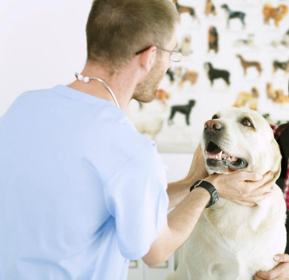 """L'esperto risponde"" – Bronchite nel cane: sintomi e rimedi"