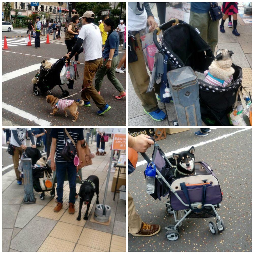 """""""Caro amico ti scrivo…"""": Come vivono i cani in Giappone? [FOTO]"""