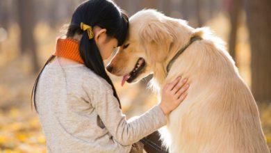 Amiamo più i cani che le persone: lo dimostra la scienza