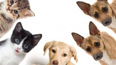 """""""BEPUPPY"""": il primo social network dedicato interamente agli animali [ESCLUSIVA]"""