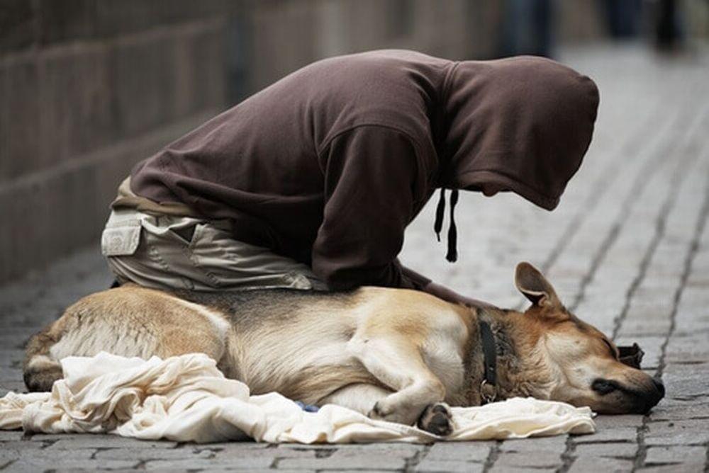 Emergenza freddo: a rischio 5.000 cani dei clochard