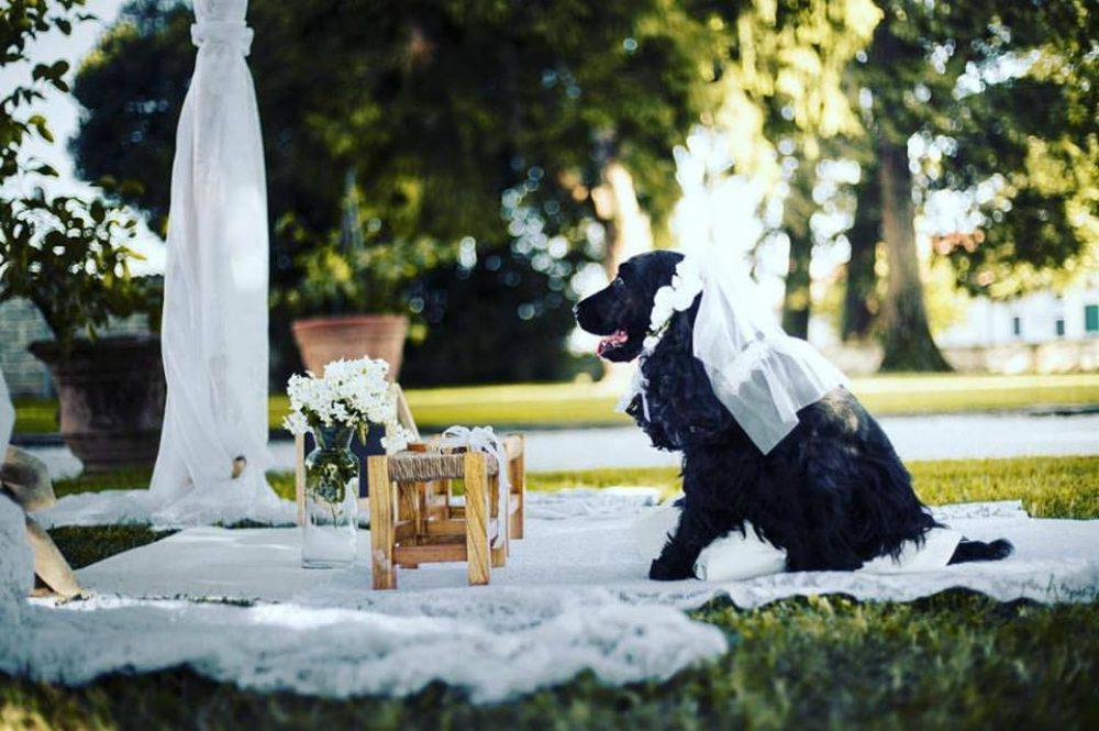Matrimoni tra cani: una moda rivoluzionaria