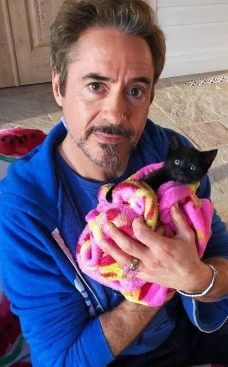 Robert Downey Jr. e il gattino sui social: la foto che ha mandato i fan in delirio