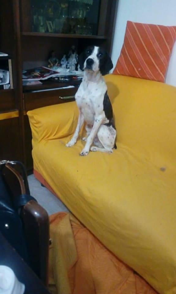 Il cane Freccia e il divano: quando una foto vale più di mille parole