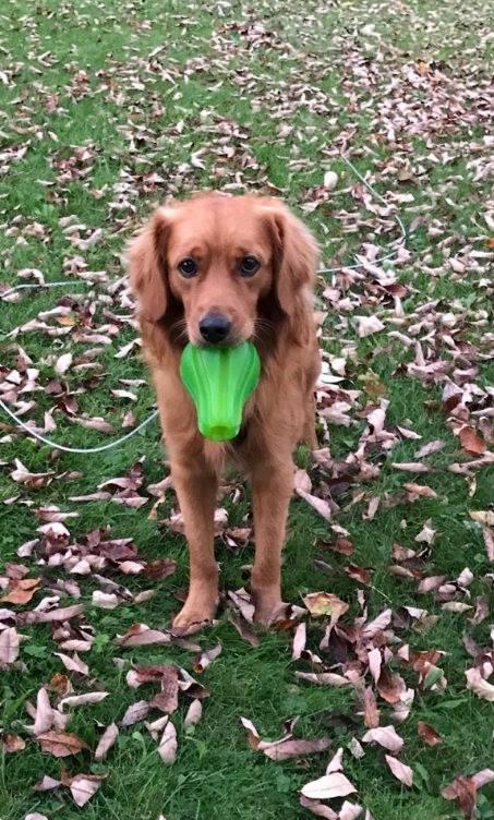 Cane crede che i proprietari abbiano paura del bagno e li - Bagno cane dopo antipulci ...