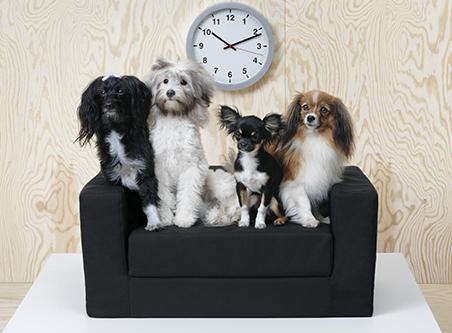 Ikea la collezione lurvig per animali è arrivata in italia la