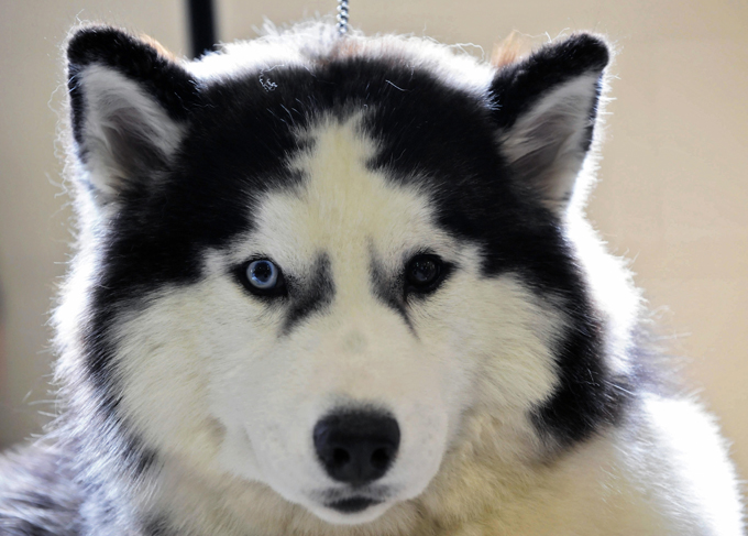 Mixed Eye Color Dogs