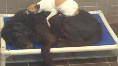 Due cani abbandonati trovano un modo incredibile per superare la solitudine
