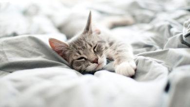 Il gatto dorme nel letto con voi? Ecco i cinque veri motivi