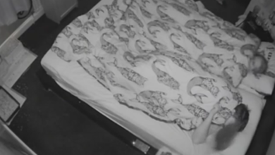 La vita notturna di un coniglio: i proprietari dormono e lui... [VIDEO]