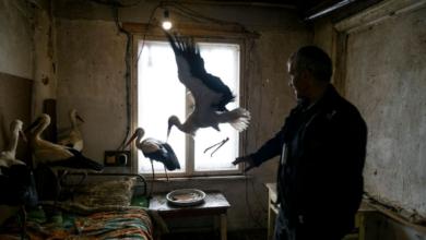Trova 5 cicogne con le ali congelate: ecco cosa fa per salvarle [VIDEO]