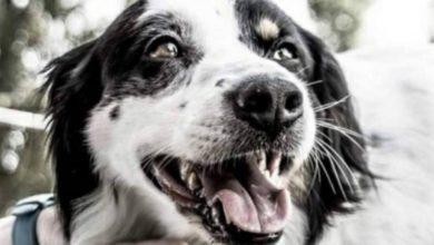 Snoopy, il cane ucciso sul suo terrazzo. Ora la sua storia è in un cortometraggio
