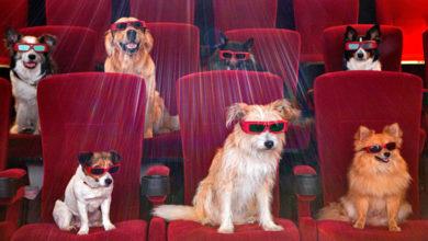 Al cinema con il cane, la nuova moda prende piede