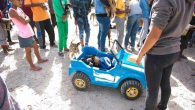Troppo povera per avere un'auto trasporta il suo cane coi cuccioli in una jeep giocattolo