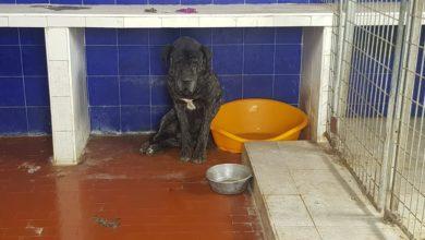 Il cane più triste del mondo: abbandonato dopo 7 anni non si muove dal box
