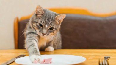 """Gatti e cibo: 5 alimenti """"killer"""" che non devono assolutamente mangiare"""